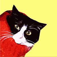 Fluffingtons Cosy Cat