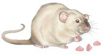 <b>Ratty Glutton</b>