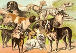 Dog Group From Antique Art