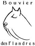 Bouvier Head Sketch w/ Text