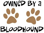 Owned By A Bloodhound