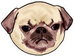 Grumpy Pug Face