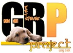 GRP - Golden Retriever Project - Way Cool