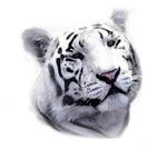 White Tiger, Tiger Shirts, Tees