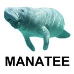 Manatee Shirts, Manatee T-shirts, Manatee Shirt