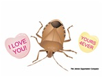 Stink Bug Love
