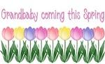 Tulips - Spring