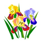Iris Flower 