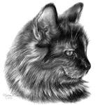 Tortoise-Shell Long-Hair Cat