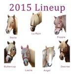 2015 Barn Lineup