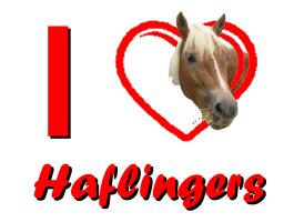 I Love Haflingers