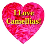 I Love Camellias