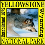 Yellowstone National Park Wolf
