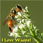 I Love Wasps!