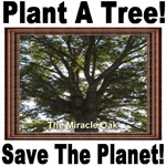 Plant A Tree! Save The Planet! The Miracle Oak