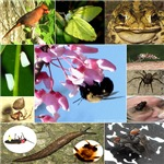 Photo Collage Insects & Small Animals (Set 4 of 4)