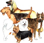Breeds starting with A