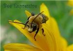 Bee Expressive