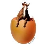 Horse Egg