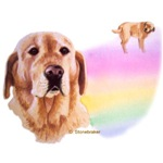 Rainbow Bridge Labradors