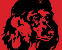 Poodle Revolution!