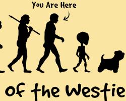 Westie Evolution