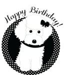 Happy Birthday White Poodle Designs