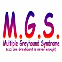 Multiple Greyhound Syndrome