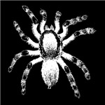 Spider Black T-Shirts