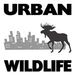 Urban Wildlife - Moose