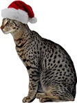 Savannah Cat Christmas