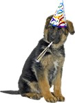 German Shepherd Birthday