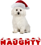Bichon Frise Christmas Naughty