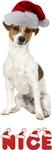 Nice Jack Russell Terrier