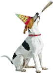 Foxhound Birthday
