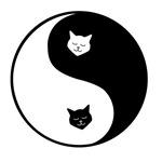yin yang meow