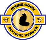 Maine Coon Herder