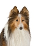 Cute Painted Sheltie