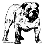 Black & White Bulldog