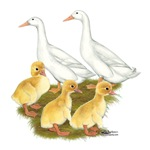 White Duck Family