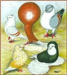 Coloring Book Pigeons
