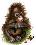 Orangutan Baby and Butterfly