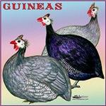 Guinea Fowl Three