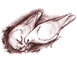 Nesting Pigeons