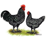 Java Rooster and Hen