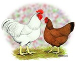 White Red Chickens