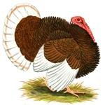 Bourbon Red Tom Turkey