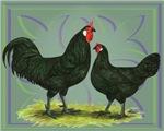 La Fleche Chickens2