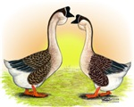 African Geese2
