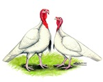 White Turkeys